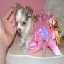 Cachorros muy dulce Chihuahua